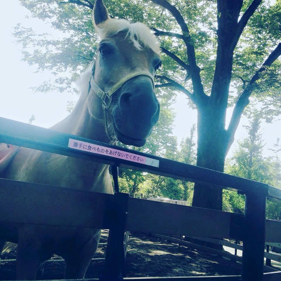 Yoyogi pony